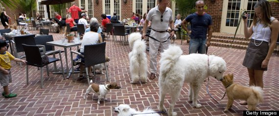 Dog restaurant friendly outside