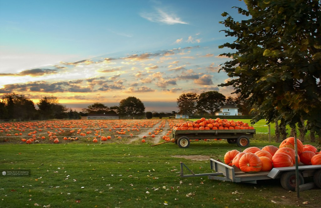 pumpkin patch field hayride