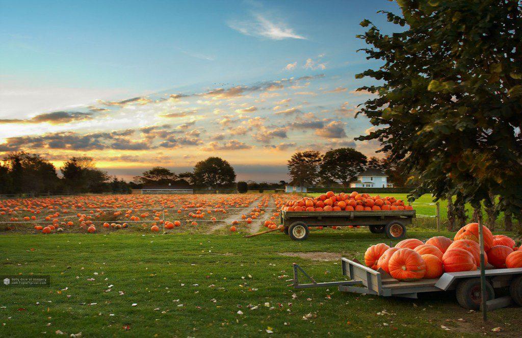 pumpkin patch field hayride