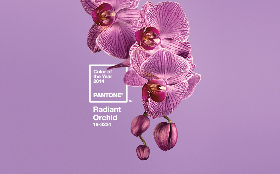 Pantone color of the year Radiant Orchid