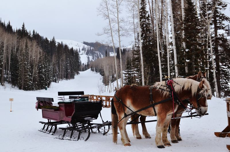 marriage proposal sled park city the yes girls
