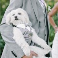pets in your wedding day