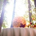 Napa Redwood Grove Proposal