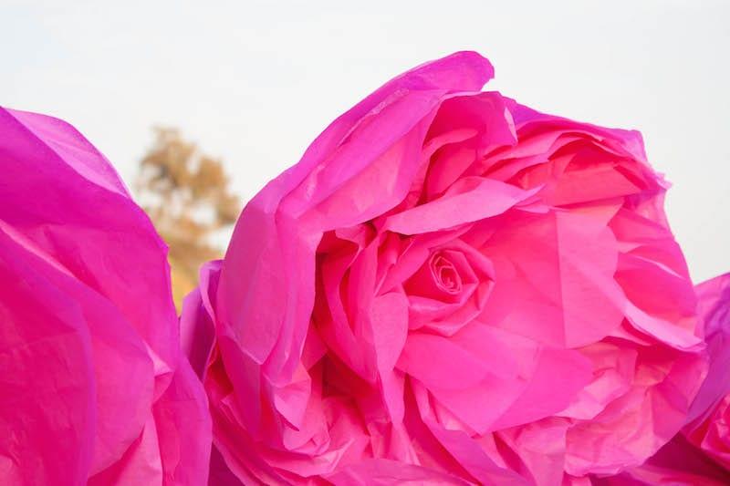 Lifesize tissue paper flower tutorial