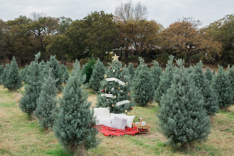 Christmas Tree Farm Proposal In Dfw Tx The Yes S - Best Christmas Tree Farm In Dfw - Image Home Garden And Tree Rtecx.Com