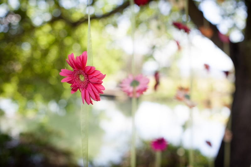 pink daisy hanging in tree