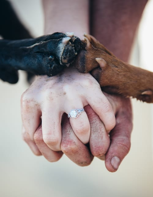 ways to include your dog in your wedding