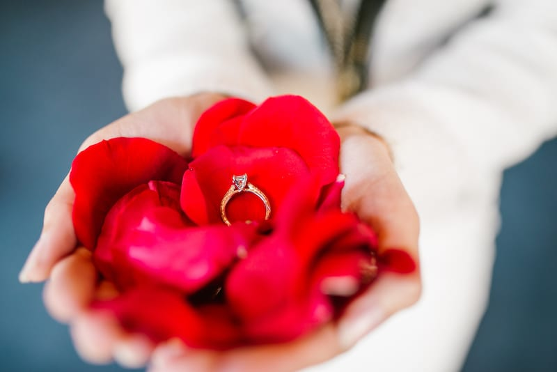 red rose petals in hand