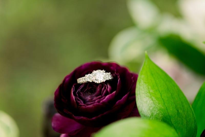 ring on purple ranunculus