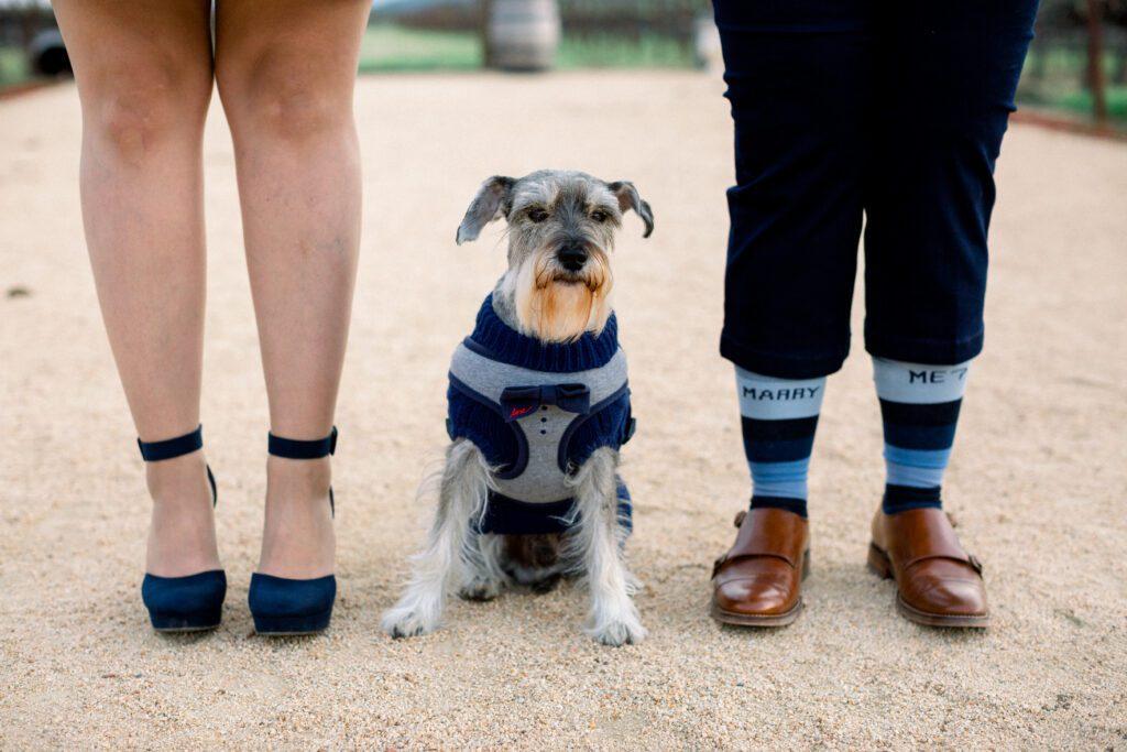 dog marriage proposal
