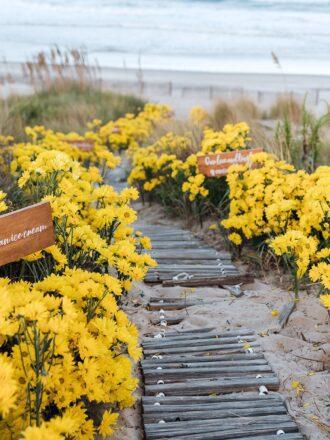 yellow daisy walkway