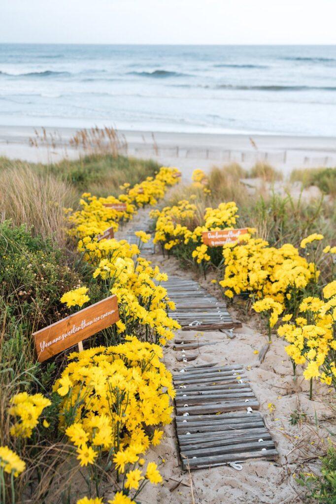 100 yellow daisy walkway